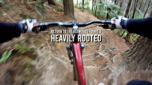 Return to the Redwoods 2 - Heavily Rooted