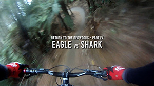 Return to the Redwoods 4 - Eagle vs Shark