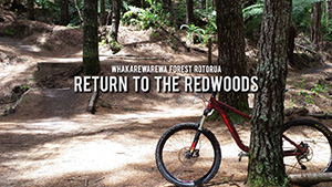 Return to the Redwoods Full Feature